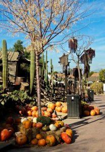 Halloween Port Aventura 5