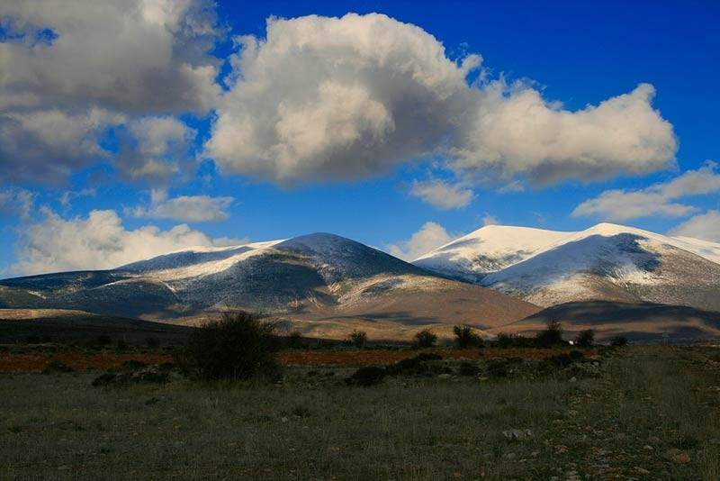 Los hongos más buscados en Aragón